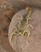 INS 09 RK0002 01