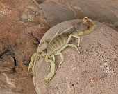 INS 09 RK0002 02