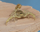INS 09 RK0003 01
