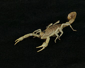 INS 09 RK0004 01
