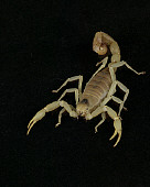 INS 09 RK0004 02