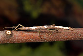 INS 10 WF0001 01