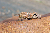 INS 11 HP0001 01
