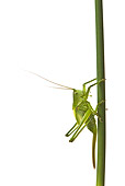 INS 11 KH0002 01