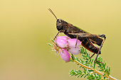 INS 11 WF0001 01