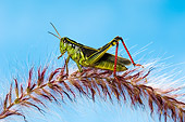 INS 11 TK0001 01