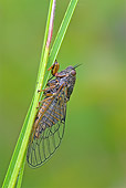 INS 12 WF0002 01