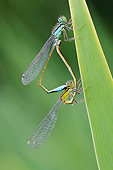 INS 13 AC0017 01