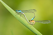 INS 13 AC0024 01