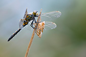 INS 13 AC0025 01