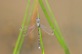 INS 13 DA0002 01
