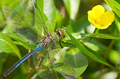 INS 13 DA0005 01