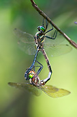 INS 13 DA0007 01