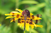 INS 13 DA0010 01