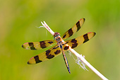 INS 13 DA0012 01