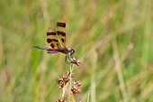 INS 13 DA0013 01