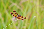 INS 13 DA0014 01