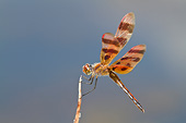 INS 13 DA0015 01