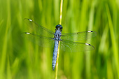 INS 13 DA0019 01