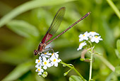 INS 13 LS0009 01