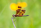 INS 13 LS0012 01
