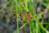 INS 13 LS0015 01