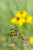 INS 13 LS0016 01