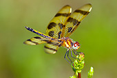 INS 13 LS0017 01