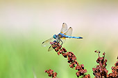 INS 13 TL0007 01