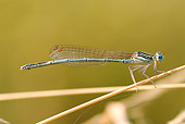 INS 13 WF0006 01