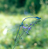 INS 13 WF0007 01