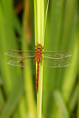 INS 13 WF0015 01