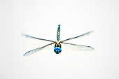 INS 13 TL0002 01