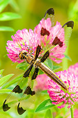 INS 13 TL0005 01