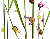INS 15 KH0003 01