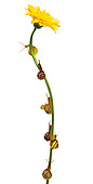 INS 15 KH0010 01
