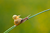 INS 15 KH0018 01