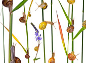 INS 15 KH0022 01