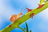 INS 15 KH0030 01
