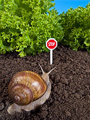 INS 15 KH0035 01