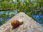 INS 15 KH0037 01