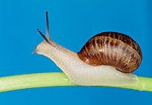 INS 15 MH0002 01
