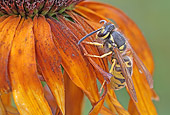 INS 17 WF0002 01