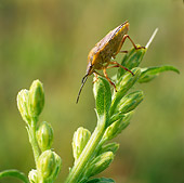 INS 17 WF0004 01