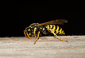INS 17 WF0005 01