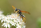 INS 17 WF0006 01