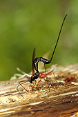 INS 17 WF0009 01