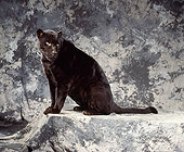 JAG 01 RK0020 04
