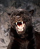 JAG 01 RK0005 11