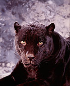 JAG 01 RK0013 03